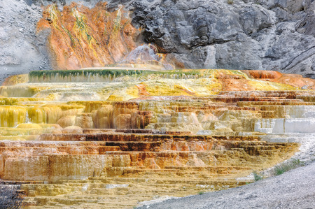 travertine: Travertine Terrace, Mammoth Hot Springs, Yellowstone,