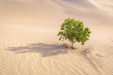 死の谷の砂漠で孤独な木