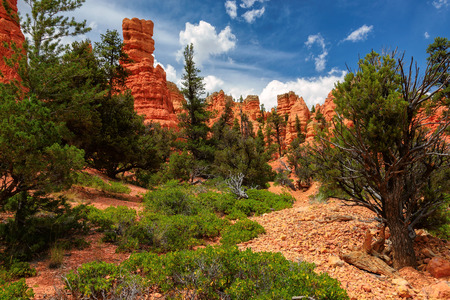 bryce: Bryce Canyon National Park, USA