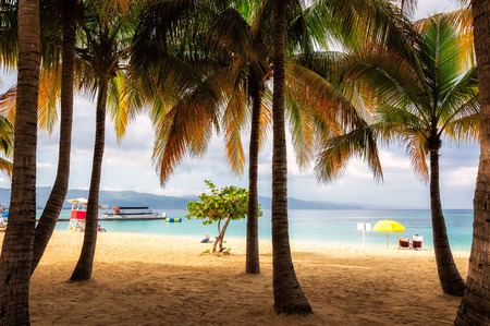 jamaica: Palm trees on Jamaica beach in Montego bay