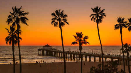 beach: Palm trees on Manhattan Beach at sunset, Los Angeles Stock Photo