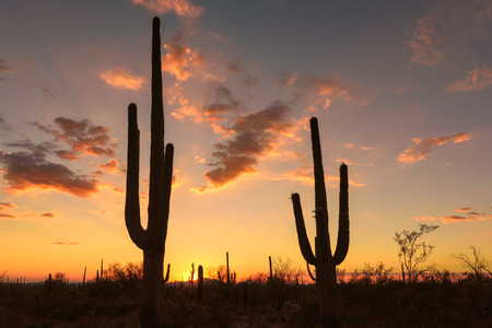 Sunset in Arizona, with Saguaro silhouette.