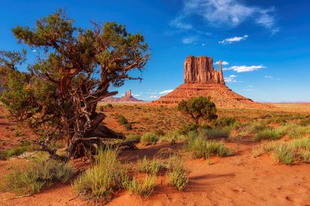 Trees in Monument Valley, Arizona