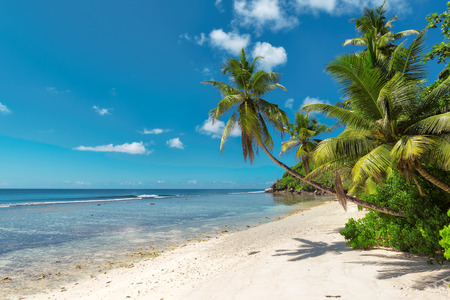 Coconut Palm tree on the sandy beach in Seychelles. Fashion, travel, summer, vacation and tropical beach concept. Reklamní fotografie