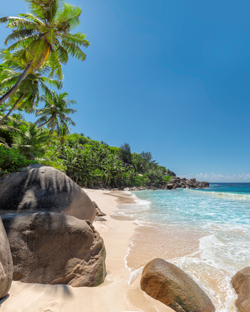 Beautiful beach. View of a nice tropical beach with palms and stones in Seychelles.