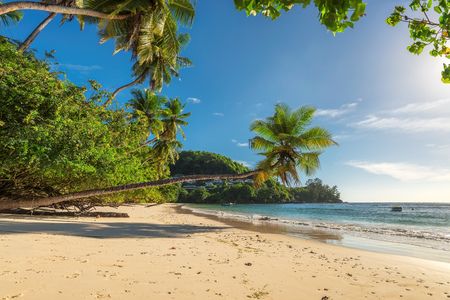 Palm tree on a tropical beach at Paradise island. Fashion travel and tropical beach concept.