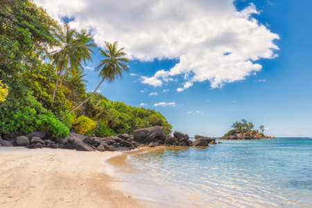Palm tree on a tropical beach at Paradise island, Seychelles. Fashion travel and tropical beach concept.