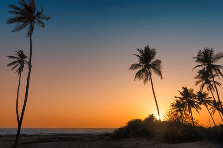 Palms on the beach at sunset.
