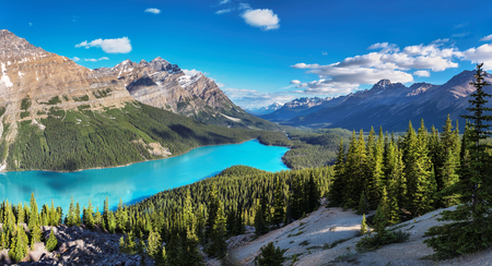 Panorama of Peyto Lake in Rocky Mountains, Banff National Park, Canada. Фото со стока