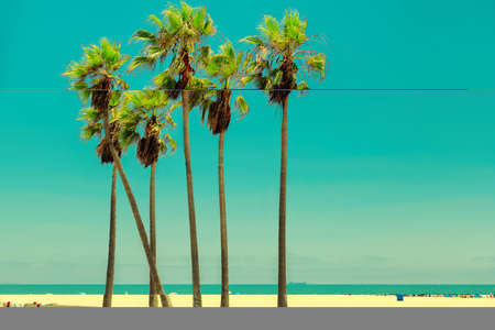 Palm trees in Venice Beach at sunset in California, Los Angeles, USA. Vintage processed. Fashion travel and tropical beach concept.