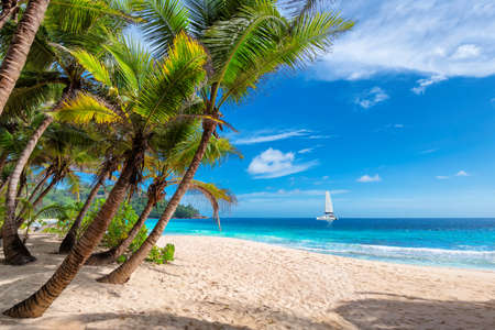 Exotic sandy beach with palm and a sailing boat in the turquoise sea on Seychelles paradise island. Summer vacation and travel concept. 免版税图像
