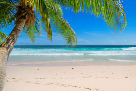Exotic sandy beach with palm and a sailing boat in the turquoise sea on Seychelles paradise island. Summer vacation and travel concept. 免版税图像 - 151124350