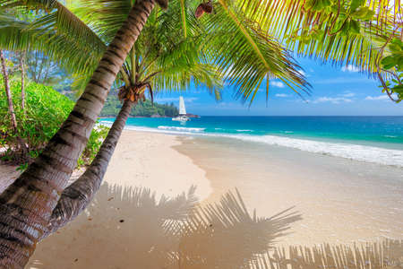 Tropical beach. Sandy beach with palm and turquoise sea. Summer vacation and tropical beach concept. Stock Photo