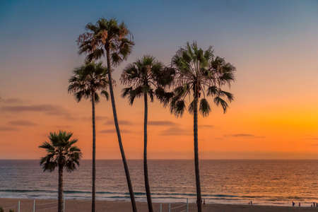 Los Angeles beach. Palm trees on Manhattan Beach at sunset in Los Angeles, California, USA. 免版税图像 - 151124360