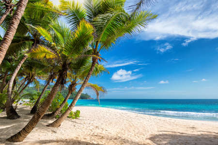 Tropical sunny beach with palm and turquoise sea. Summer vacation and tropical beach concept. 免版税图像