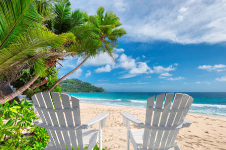 Vacation sunny beach with palm and chairs and turquoise sea.