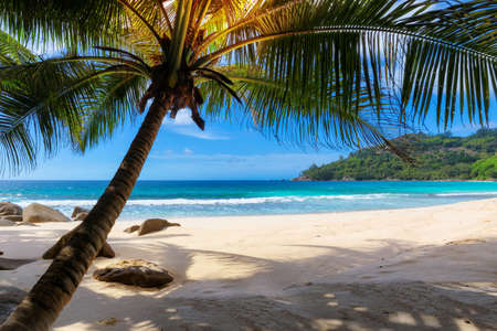 Tropical sunny beach with palm and turquoise sea. Summer vacation and tropical beach concept.