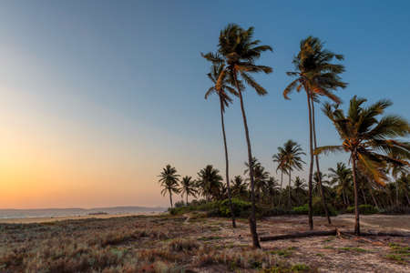Coco palms on tropical paradise beach at sunset, GOA, India