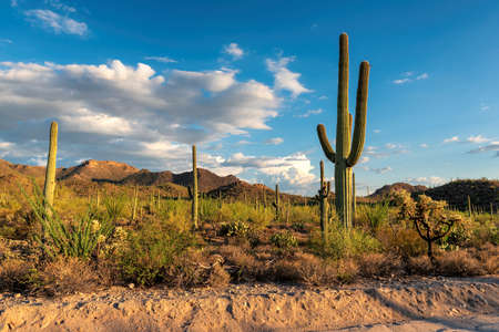 Saguaro National Park near Tucson, Arizona 免版税图像 - 152428726