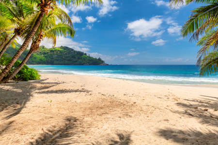 Tropical white sand beach with coco palms and the turquoise sea on Caribbean island. 免版税图像 - 152428740
