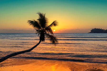 Coconut palm silhouette at sunset over tropical beach.