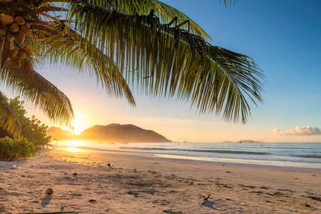 Tropical beach at sunrise with palms in Jamaica island. Summer vacation and travel concept. 免版税图像 - 152428747