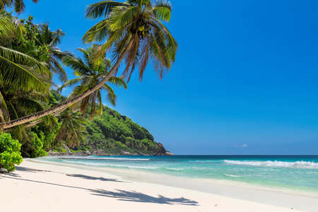 Tropical white sand beach with coco palms and the turquoise sea on Caribbean island. 免版税图像 - 152428749