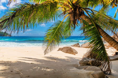 Tropical white sand beach with coco palms and the turquoise sea on Caribbean island. 免版税图像 - 152428753