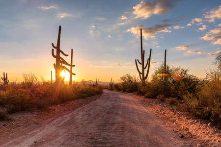 Scenic road in Saguaro National Park, Tucson, Arizona
