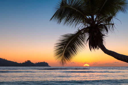 Beautiful sunset over the sea with coco palm on the beach in paradise island 免版税图像