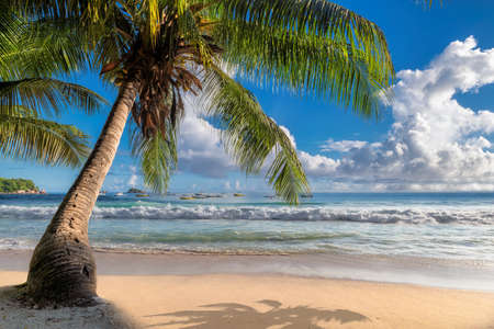 Tropical beach with coco palms in Seychelles, Anse Takamaka beach. Summer vacation and travel concept.