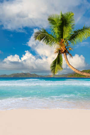 Tropical white sand beach with coco palms and the turquoise sea on Caribbean island.