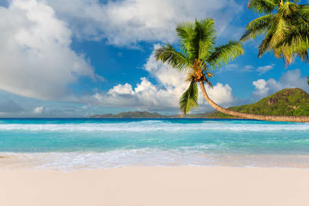 Tropical white sand beach with coco palms and the turquoise sea on Caribbean island. 免版税图像 - 152428800
