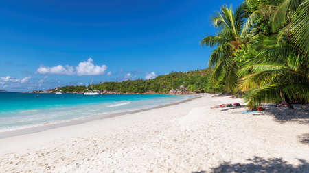 Tropical sand beach and coconut palms on Seychelles. Summer vacation and tropical beach concept.