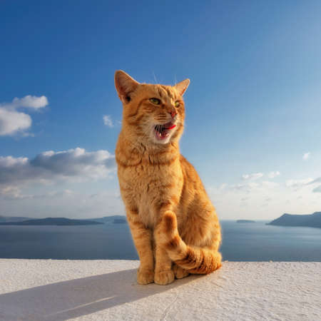 Beautiful red cat against the sea with blue sky at sunset in Santorini, Greece