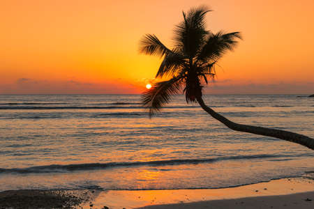 Sunset over the sea with coco palm on the beach in Jamaica Caribbean island