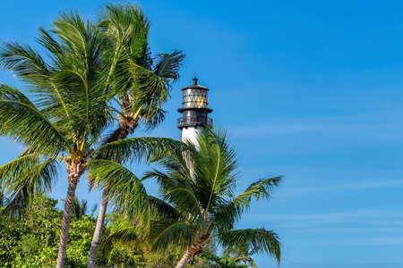 Palm trees around the Cape Florida Lighthouse on Key Biscayne, Miami, Florida, USA 免版税图像