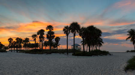 Sunrise at palm trees by the ocean beach in Miami Beach, Florida 免版税图像