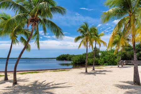 Sunny beach with coco palms and tropical sea in Key Largo beach, Florida. 免版税图像