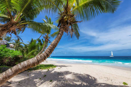 Sunny tropical white sand beach with coco palms and the turquoise sea on Caribbean island.