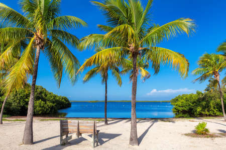 Palm trees on tropical sunny beach and Caribbean sea 免版税图像