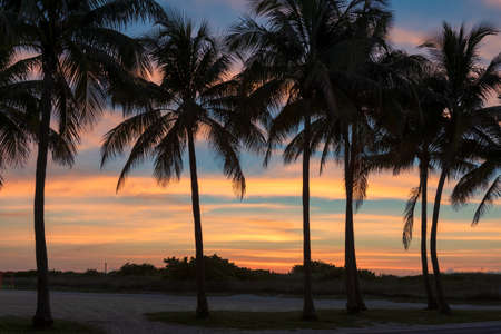 Palm trees on Miami Beach at sunrise, South Beach 免版税图像