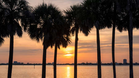 Beach sunset. Palm trees at Sunset in Siesta Key beach 免版税图像