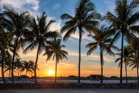 Palm trees on Miami Beach at sunrise in Ocean Drive, South Beach