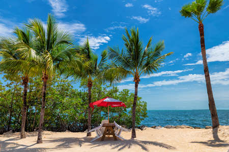 Coco palm trees, chairs under umbrella on a tropical beach in Key Largo island 免版税图像