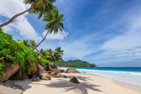Sunny beach with palm and turquoise sea in Seychelles. Summer vacation and tropical beach concept. 免版税图像