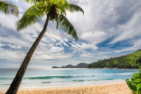 Coconut palms on tropical Sunny beach, Anse Takamaka beach, Seychelles. Summer vacation and tropical beach concept.