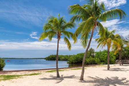 Coconut palm trees on a tropical sandy beach in Florida Keys. 免版税图像