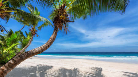 Coconut palm trees on tropical beach on paradise island.
