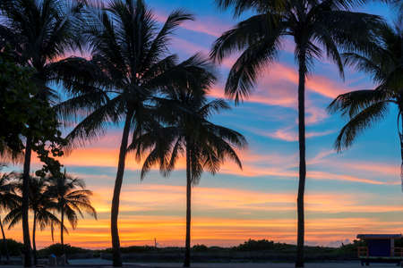 Coconut palm trees silhouette on tropical beach at sunrise in Miami Beach, Florida. 免版税图像
